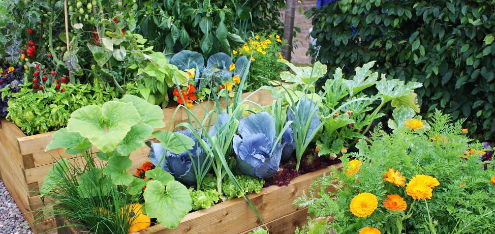 10 vegetables that you can grow in the shade