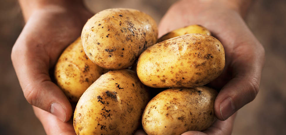 How to grow potatoes (part 1)