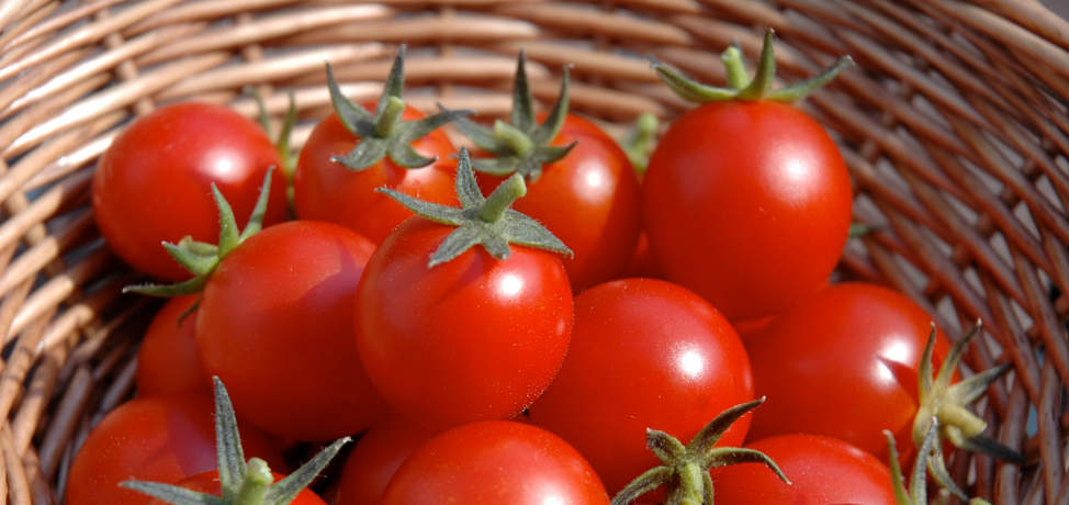 How to grow tomatoes (part 2): Growing tomatoes in containers