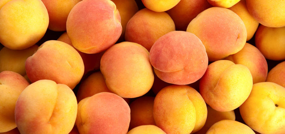 The amazing benefits of apricots