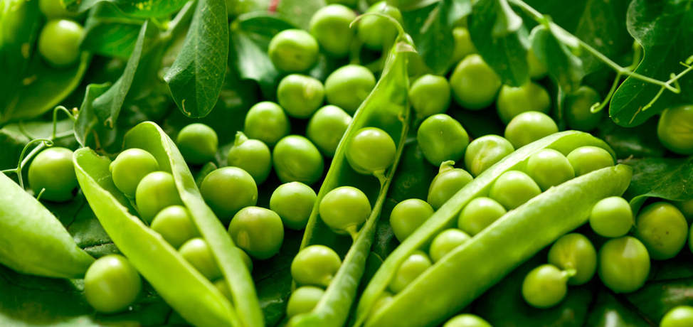 The benefits of eating peas